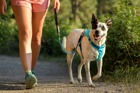 Ruffwear HiLight Harness Blue Atoll