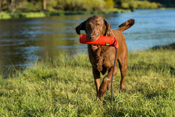 Ruffwear Lunker Floating Throw Dog Toy