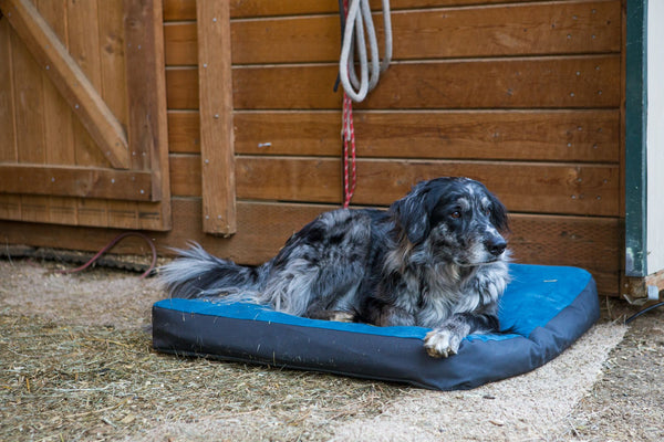 Ruffwear Urban Sprawl Bed for Dogs and Cats