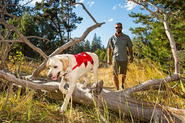 Ruffwear Dog Harness: Web Master
