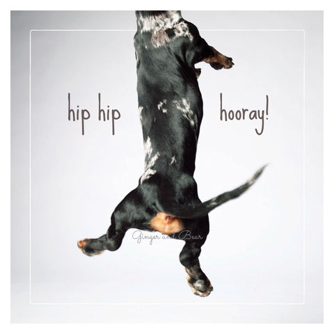 Congratulations: Benny the Dachshund is so excited he's jumped out of the card!