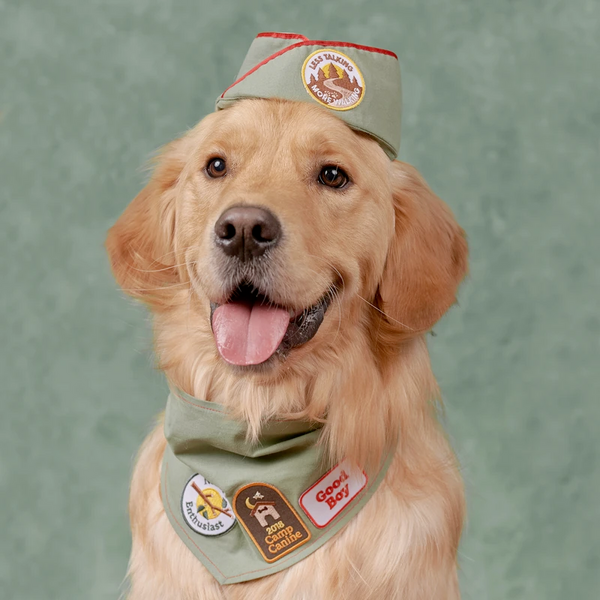 Dog Merit Badges: Camp Canine
