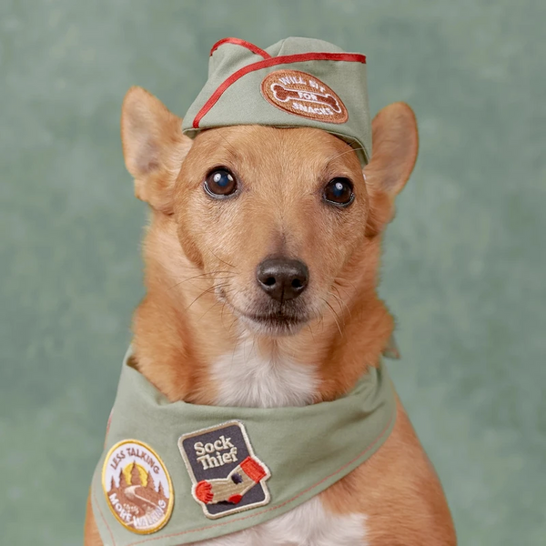 Dog Merit Badges: Sock Thief