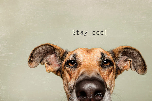 Postcard: Stay cool