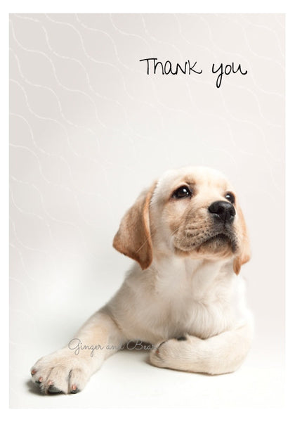 Thank you Notecard box: Yellow Labrador Retriever Puppy