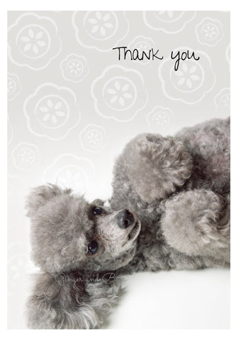 Thank you Notecard box: Poodle