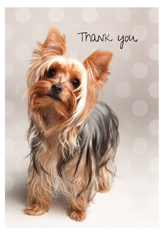Thank you Notecard box: Yorkshire Terrier