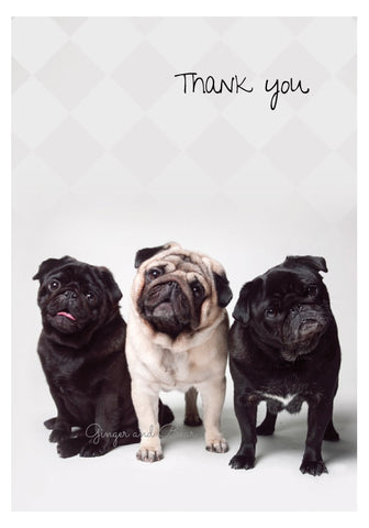 Thank you Notecard box: Pug Trio