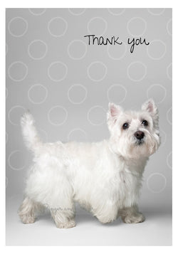 Thank you Notecard box: West Highland Terrier