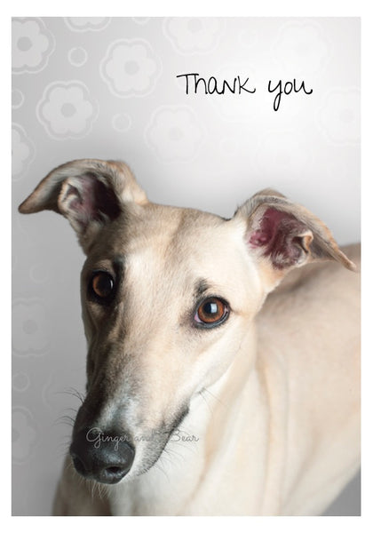 Thank you Notecard box: Greyhound