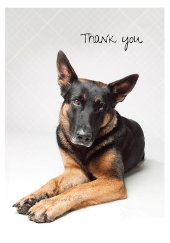 Thank you Notecard box: German Shepherd