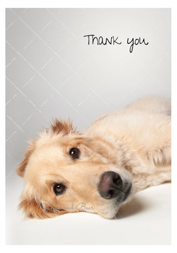 Thank you Notecard box: Golden Retriever