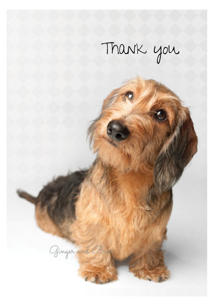 Thank you Notecard box: Wire Haired Dachshund