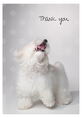 Thank you Notecard box: Happy Havanese