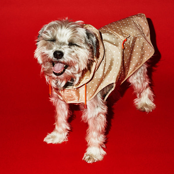 Ware of the Dog Dot Anorak Raincoat with Hood in Tan/White polka dots