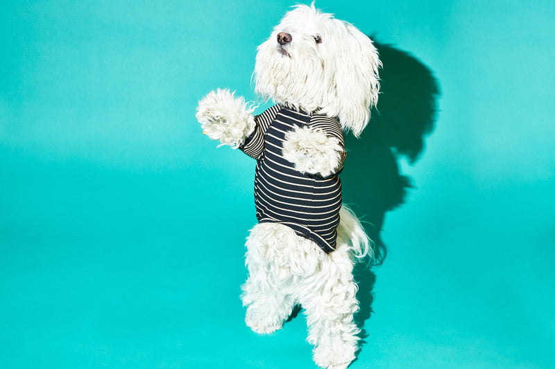 Ware of the Dog Contrast Striped Dog t shirt Black Tan