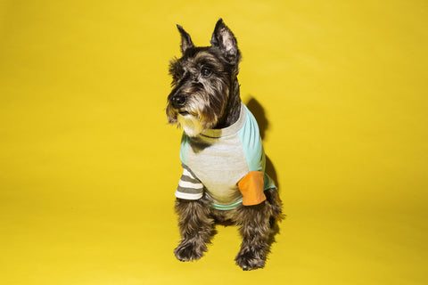 Ware of the dog ColourBlock T-shirt Aqua