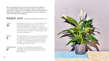 Load image into Gallery viewer, The Little Book of House Plants and other greenery (Emma Sibley)