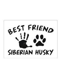 Best Friend Siberian Huskey