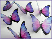 pink and purple butterflies by flutterframes