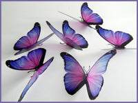 Lilac Very pretty butterflies