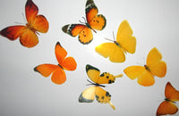 3d butterflies the Yellow and Orange collection, butterfly decor for the wall,conservatory, home,bedroom, lounge,window decorations, vase