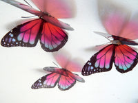 David Attenborough monarch butterflies