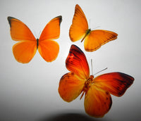 orange natural butterfly wall sticker