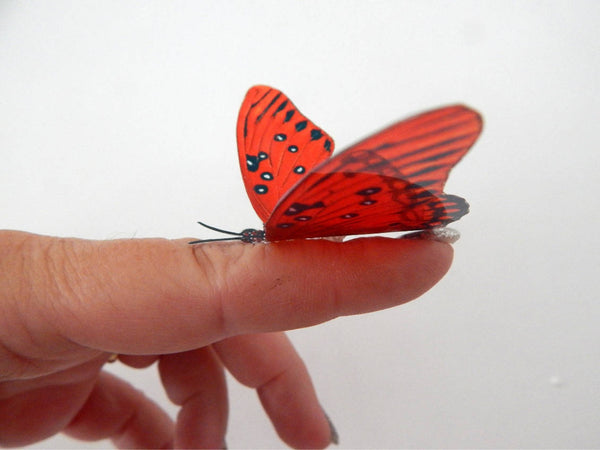 red natural butterfly