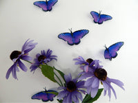 British Purple natural butterflies