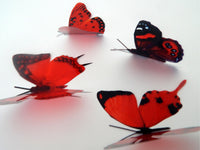 3d butterflies the Red collection, butterfly decor for the wall,conservatory, home,bedroom, lounge,window decorations,vase, red butterflies
