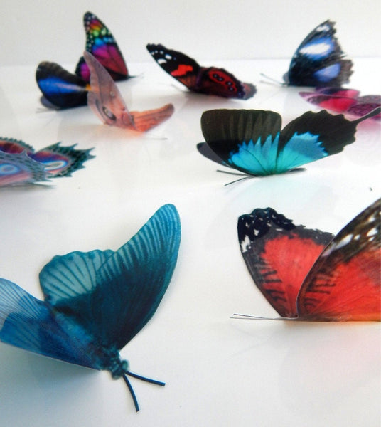 Natural set of butterfly 3d wall stickers