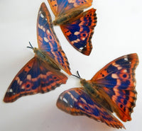 Natural faux butterflies by Flutterframes