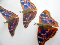 Horniman museum for natural  butterflies