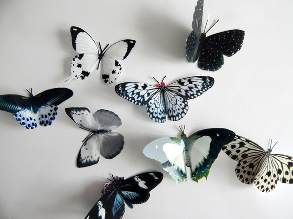black and white 3d butterfly stickers