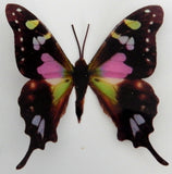 Spotted Swallow tail natural sticker