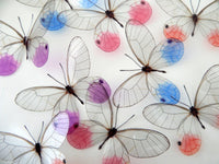 glass winged butterflies by flutterframes