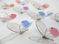 Glass Winged Natural 3D  Butterflies, transparent Butterfly stickers,  natural 3d wall art,wall art decals,window, Glass Wing,nature