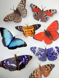 8 natural 3D butterflies, the Country collection for bathroom,shower,tiles,conservatory,garden decor,3d wall decor,realistic butterflies
