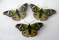 green buckeye butterfly decor by flutterframes