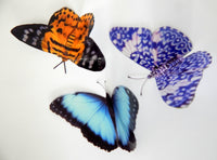 Escape to the Chateau butterflies , country collection