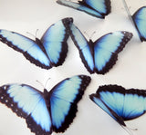 Natural blue 3d butterfly stickers (Mangal) great for around the house, unique decor for any room