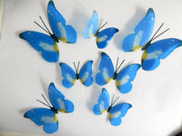 blue and yellow natural butterflies