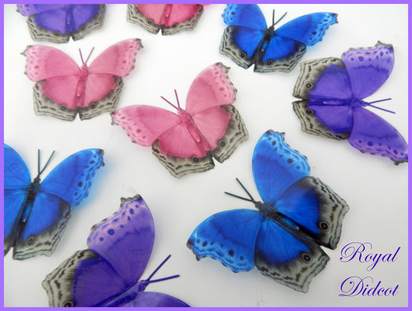 Pink, blue and purple natural 3d butterfly stickers, from the Royal Didcot collection