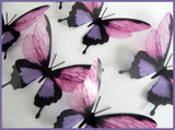 purple butterflies by flutterframes