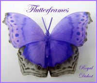 purple natural butterfly