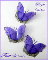 Royal didcot purple natural butterfly