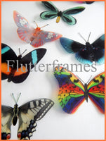 Rare collection of butterflies, 8 natural looking butterfly stickers