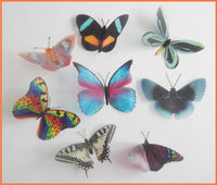 Rare natural butterflies stickers