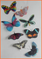 Rare natural butterflies stickers by Flutterframes